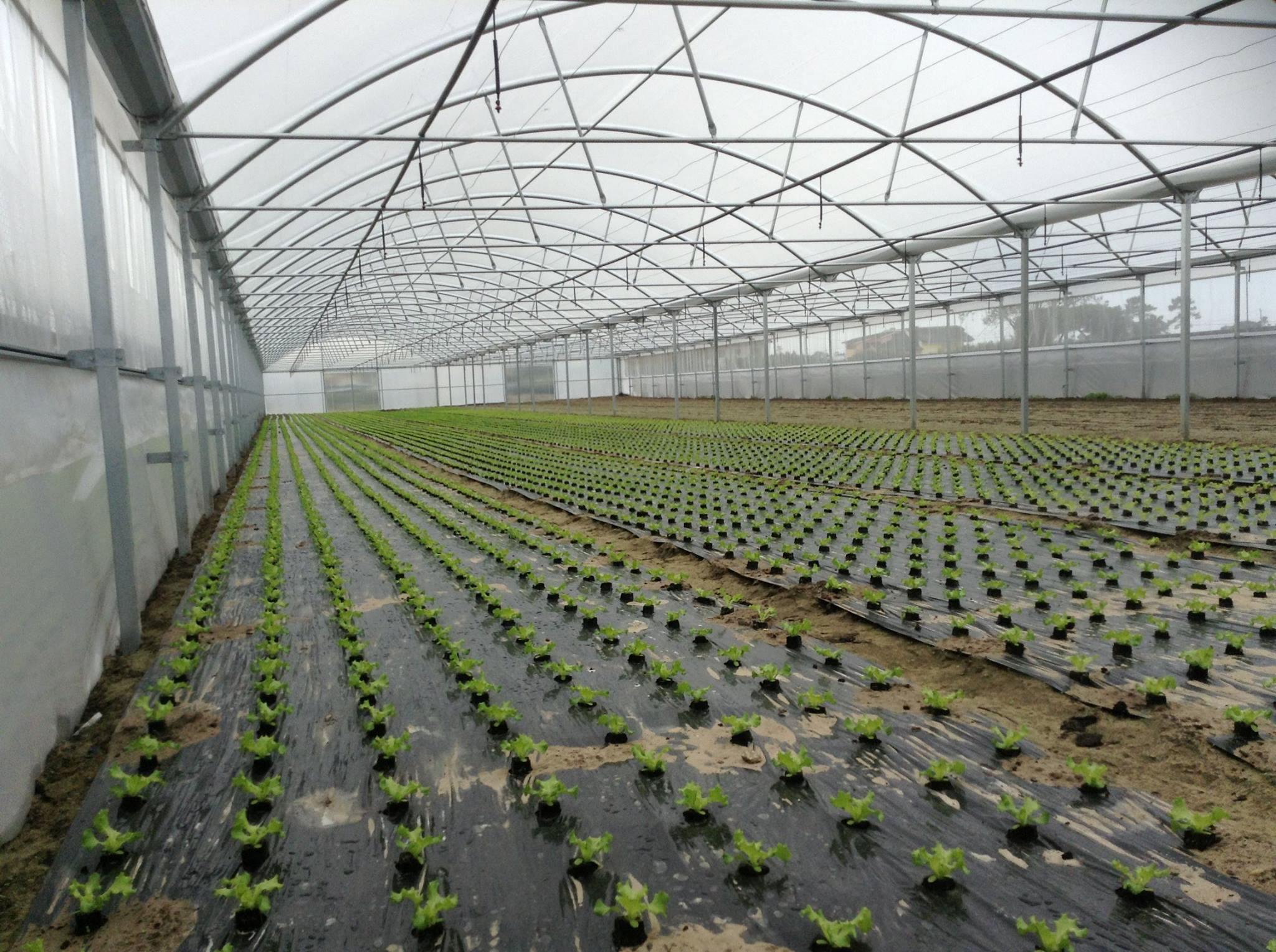 estufas agrícolas